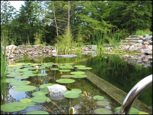 Natural pools in ontario - Swimming pools made to look like ponds ...